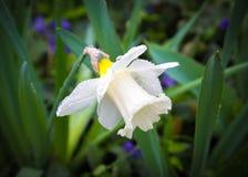 Падения на цветке Стоковое Изображение RF