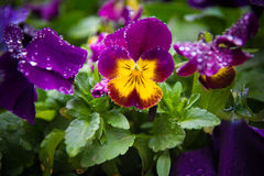 Падения на цветке Стоковые Фото