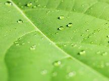 Падения дождя на лист дерева Стоковые Изображения