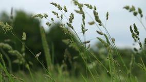Падения дождя на траве видеоматериал