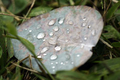 Падения росы лист евкалипта Стоковая Фотография RF