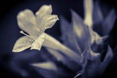 Падения росы на верхней части Стоковое Фото