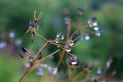 Падения росы на заводах Стоковая Фотография RF