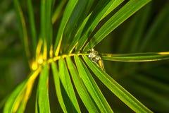 Падения росы на лист ладони Стоковая Фотография RF
