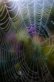 Падения росы на сети паука Стоковая Фотография RF