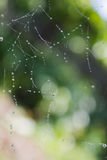 Падения росы на сети паука Стоковое фото RF