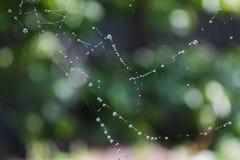 Падения росы на сети паука Стоковая Фотография