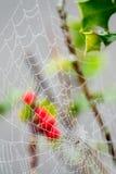 Падения росы на сети паука Стоковое Изображение