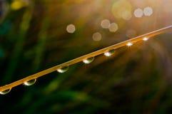 Падения росы на стержне травы Стоковые Фотографии RF
