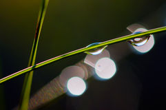 Падения росы на стержнях травы Стоковая Фотография RF
