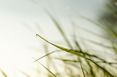 Падения росы на траве Стоковые Фото