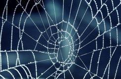 падения росы покрыли tracery сети паука рано утром Стоковое Фото