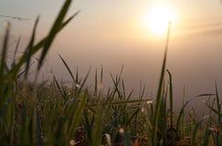 Падения росы Стоковые Фото