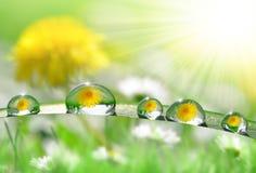 Падения росы Стоковая Фотография RF