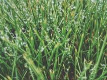 Падения росы Стоковое Изображение