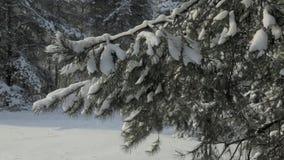 Падения снега леса зимы видеоматериал