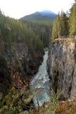 Падения Athabasca, канадские скалистые горы Стоковые Изображения