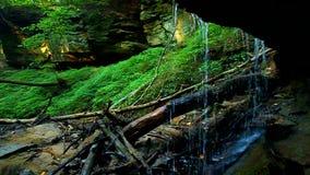 Падения Maidenhair парка штата теней видеоматериал