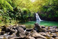 Падения Waikamoi тропического водопада более низкие и малый кристалл - ясный пруд, внутри плотного тропического тропического леса Стоковые Фото