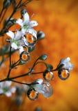 Падения Whater в апельсине Стоковые Фото