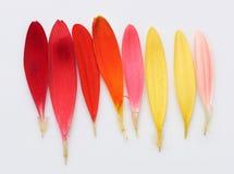 Палитра радуги пер цветка Стоковые Фото