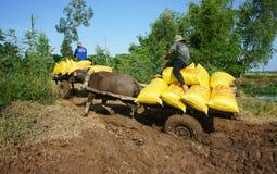 Пади перехода тележки буйвола в мешке риса Стоковые Изображения