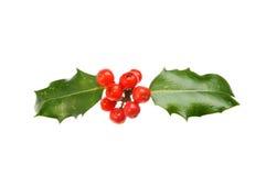 Падуб с ягодами Стоковое Изображение RF