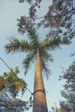 Пальма витает стоковые изображения rf