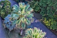 Пальма в дендропарке Сочи Стоковое фото RF