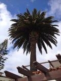 Пальма в острове Каталины стоковое фото rf