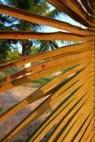 Пальма в Пуэрто-Рико Стоковые Изображения RF