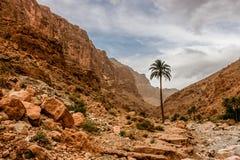 Пальма в ущельях Todra, Марокко стоковое изображение