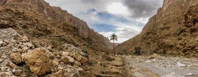 Пальма в ущельях Todra, Марокко стоковая фотография