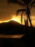 Пальма захода солнца Стоковые Фото
