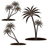 Пальма значка Стоковая Фотография RF