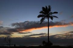 Пальма и восход солнца Стоковые Изображения RF