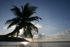 Пальма и заходящее солнце Стоковое Фото