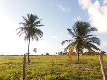 Пальма и поле Стоковые Изображения RF