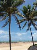 Пальма и пляж 2 Стоковая Фотография