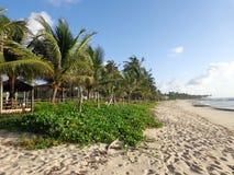 Пальма и пляж 3 Стоковая Фотография RF