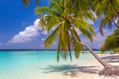 Пальма кокоса на мечтательном пляже Стоковая Фотография