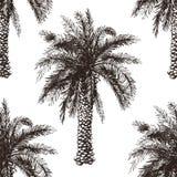 Пальма нарисованная рукой безшовная Стоковые Изображения