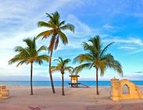 пальма на красивом солнечном после полудня лета в пляже Голливуда Стоковые Фотографии RF
