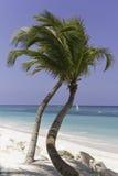 Красивейший пляж с пальмой Стоковое фото RF