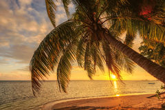 Пальма на пляже на заходе солнца на Сейшельских островах Стоковое Изображение