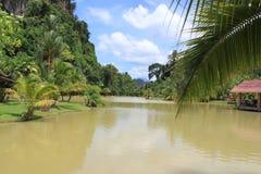 Пальма над рекой Стоковые Фотографии RF