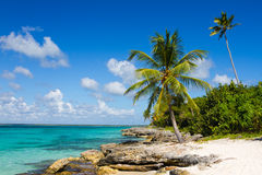 Пальма на тропическом пляже, Доминиканская Республика Стоковая Фотография