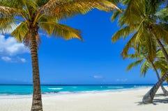 Пальма на экзотическом пляже на тропическом острове Стоковая Фотография RF