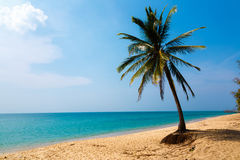 Пальма на seashore Стоковое фото RF