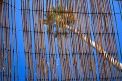 Пальма острова Каталины через сплетенную крышу ротанга Стоковое Изображение RF
